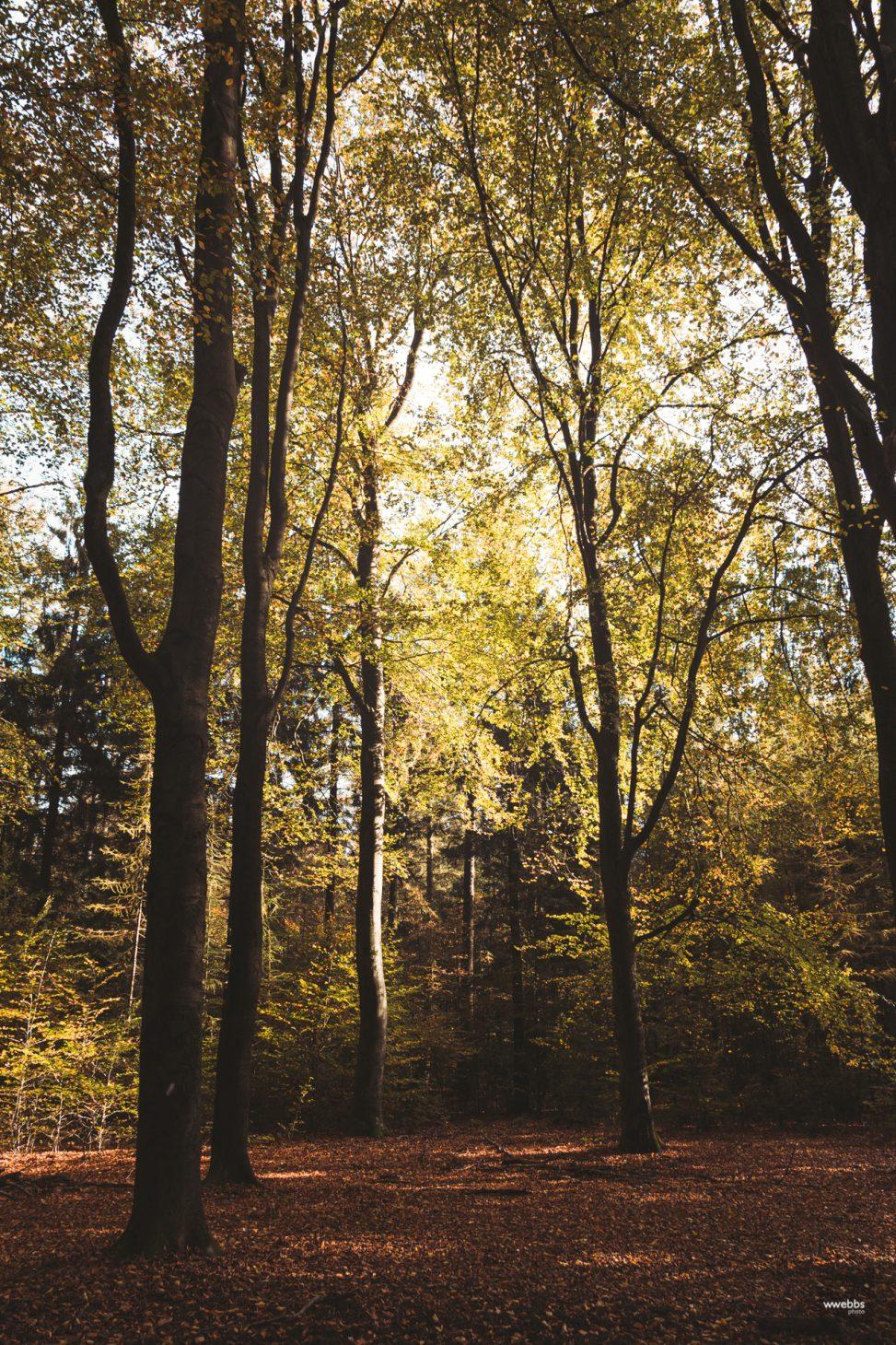 Autumn Light - Series - 01