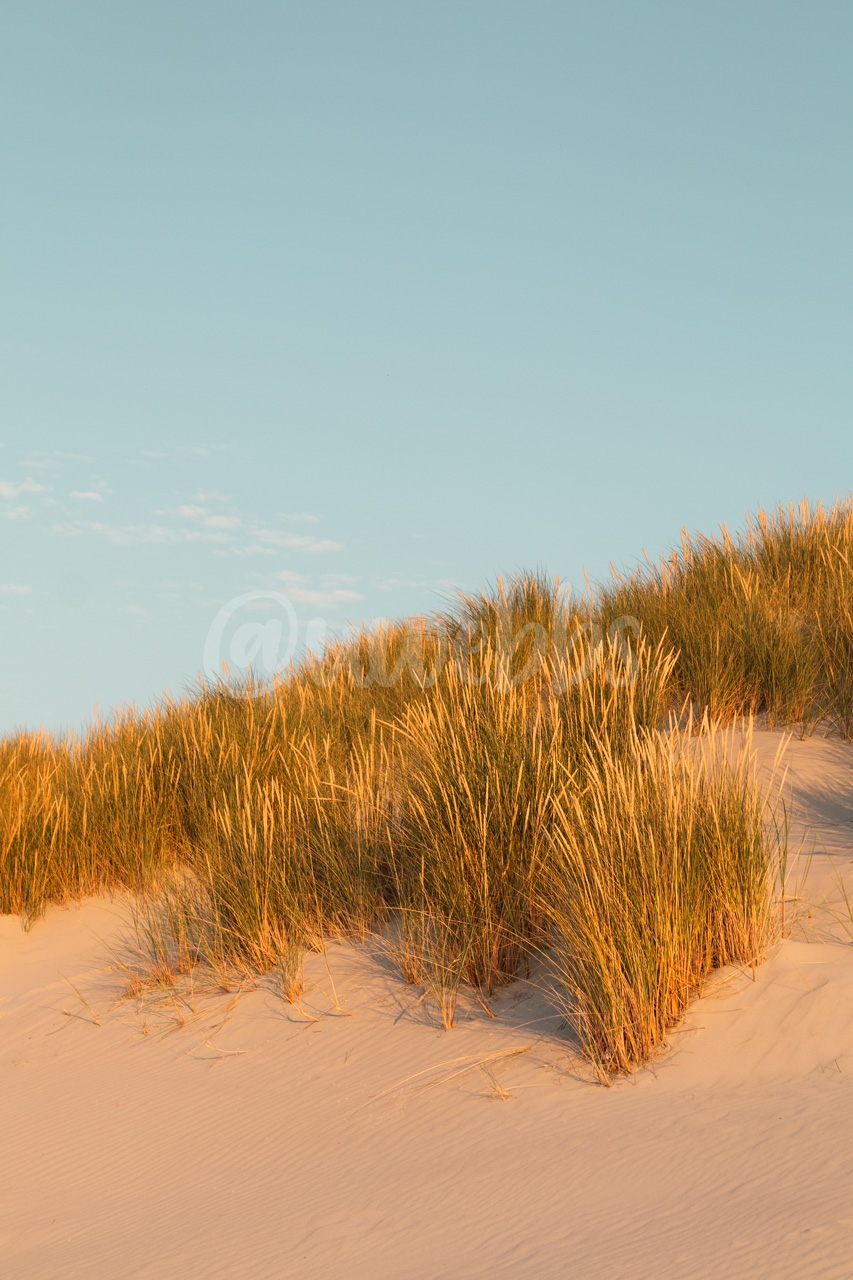 Golden Dunes Grass - Series - 01