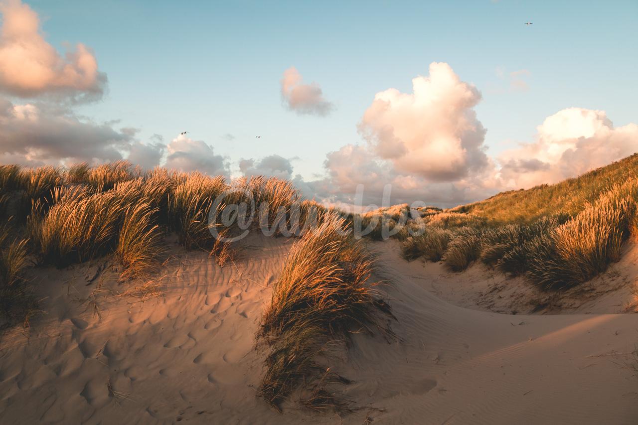 Through the Sunset Dunes